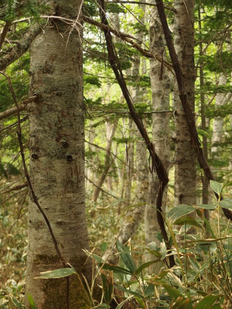 Parc national de Shiretoko (Japon) 26 mai 2016 © Tango tout horizon